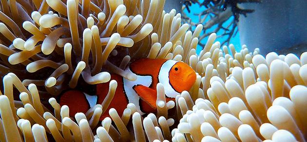 the great barrier reef queensland