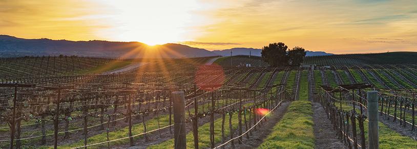 vineyard in adelaide
