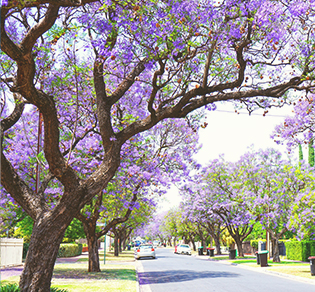 a street in adelaide